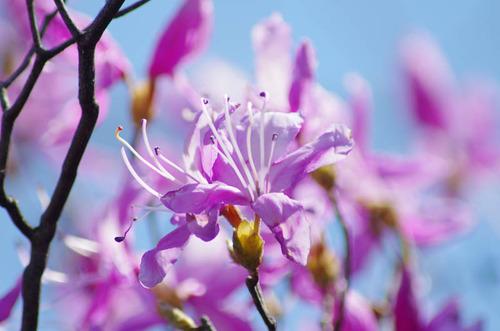 春の明るさ2012-5