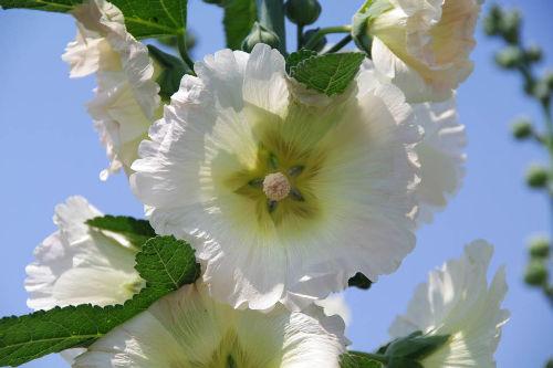 散歩道の花201006-5