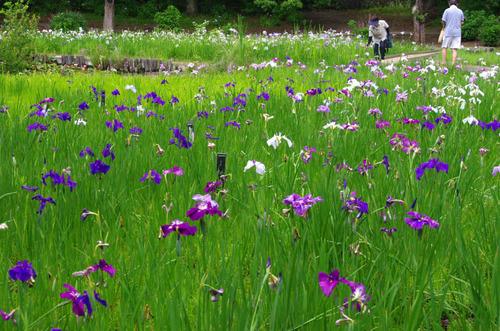 昭和記念公園201306-4