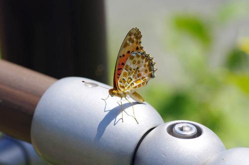 散歩道の花8月2012-10