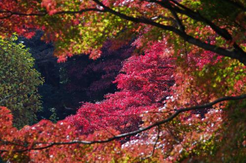 百草園紅葉201011-6