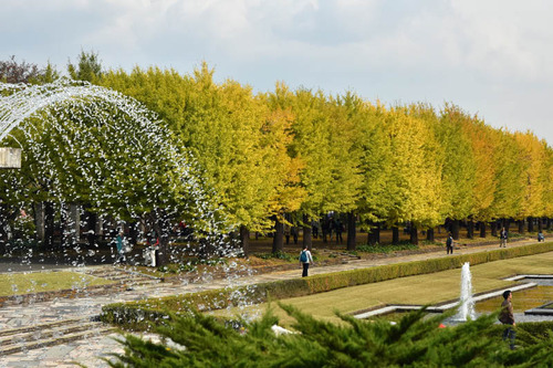 昭和記念公園201511-4