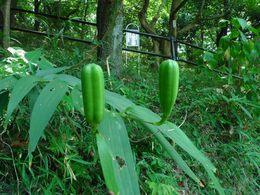 花と実200909-5