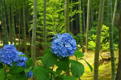 京都201307-10