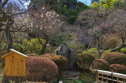 京王百草園201101-3