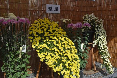 高幡不動尊201511-14