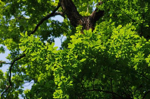 神代植物公園201305-11