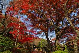 百草園の紅葉-S9