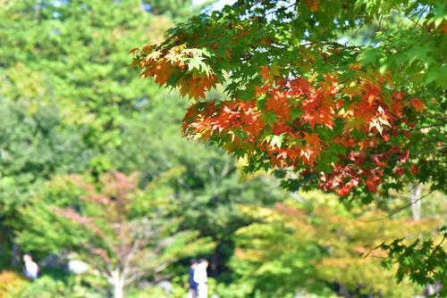 昭和記念公園201510-8