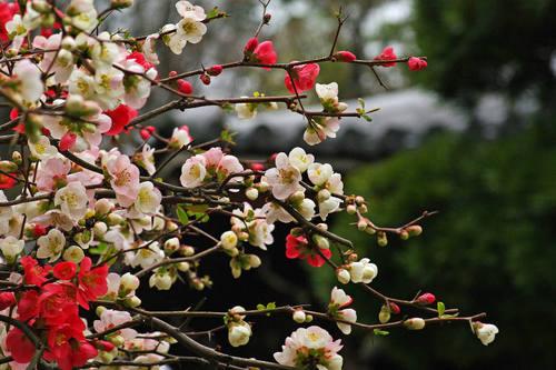 高幡不動尊20100328-4