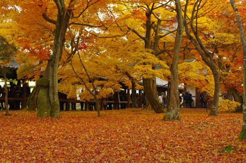 京都東福寺201211-10