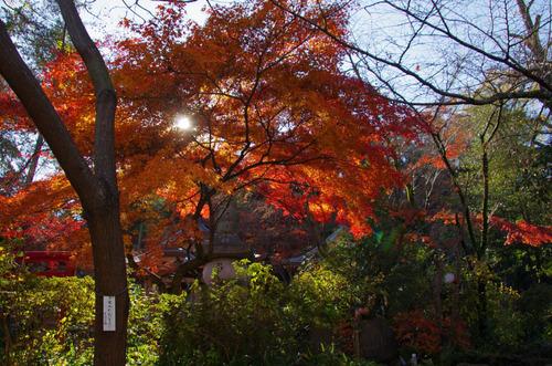高幡不動201112-4