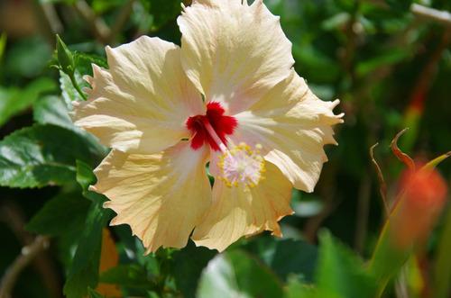 沖縄20110801-12