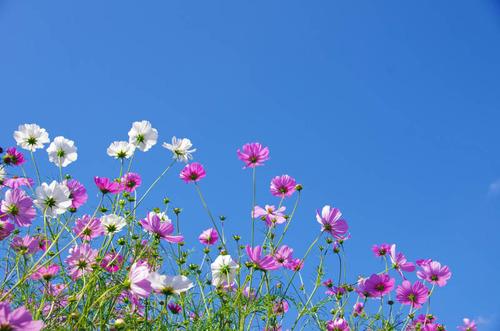 昭和記念公園201210-7