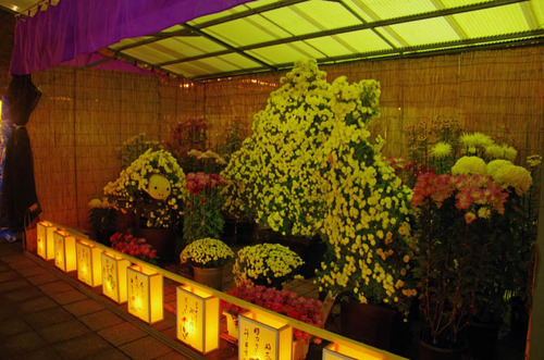 高幡不動尊万燈会201211-10