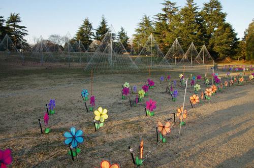 昭和記念公園201312-4