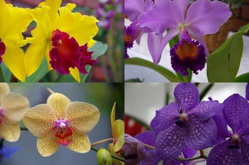 神代植物園2011-1