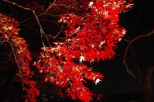 京王百草園201111-7
