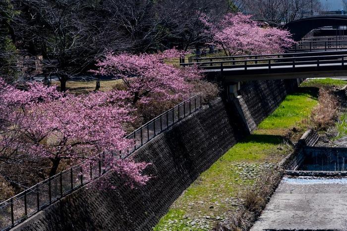 昭和記念公園201903