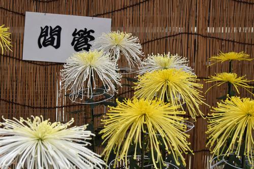 高幡不動尊201511-9