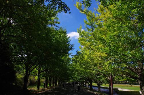 昭和記念公園201209-2