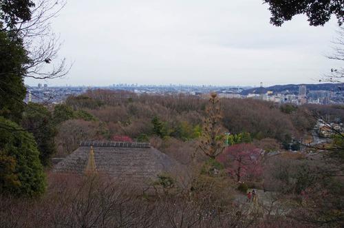 京王百草園201302-10