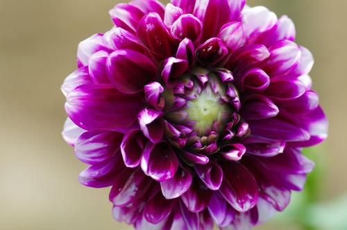 夏の花201107-8