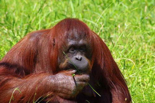 多摩動物公園201109-9