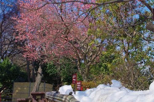 京王百草園201402-1