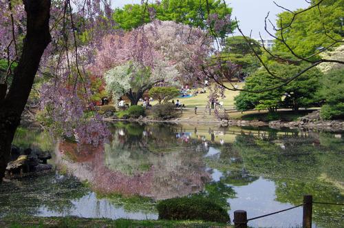 新宿御苑201104-1