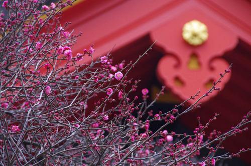 高幡不動20120226-8