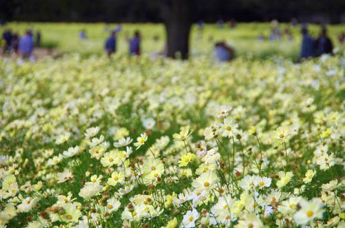 昭和記念公園201211-5