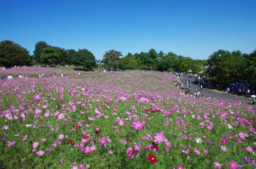 昭和記念公園201310-8
