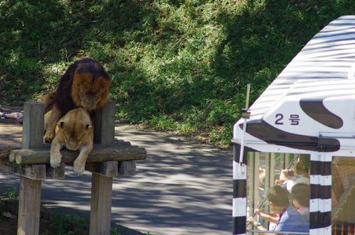 多摩動物公園201109-16
