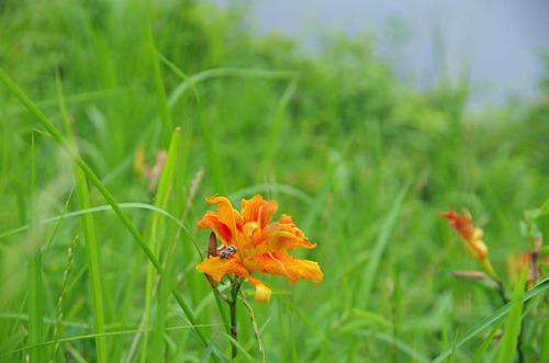 河川敷の花201207-6