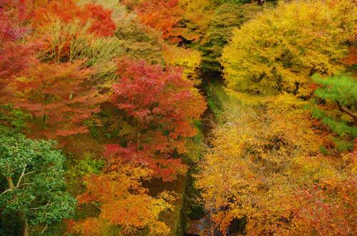 京都東福寺201211-4