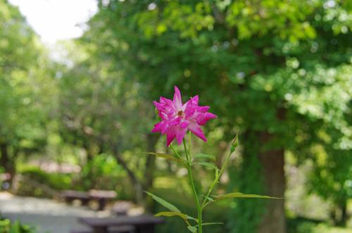 京王百草園201109-1