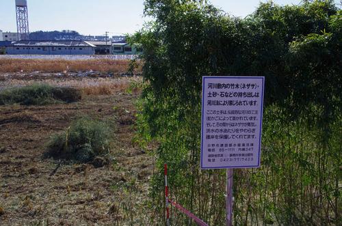 浅川河川敷201301-6