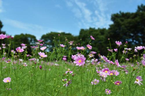 昭和記念公園201509-3