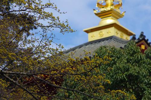 高幡不動201203-11