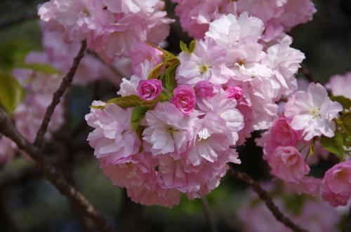 新宿御苑201104-7