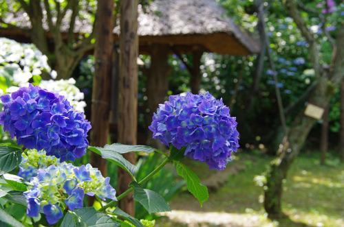 京王百草園201106-12