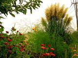 秋の草花-7