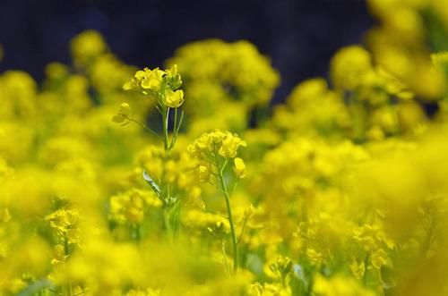 春の明るさ2012-1