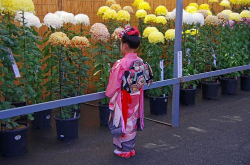 高幡不動201111-14