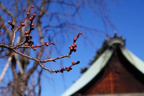 高幡不動尊20100124-8