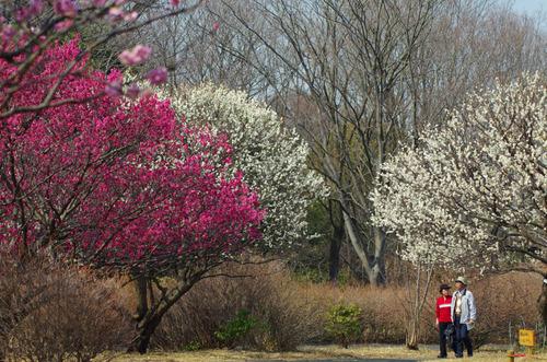 昭和記念公園201303-1