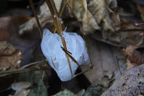 京王百草園201101-12