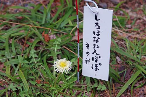 高幡不動201403-2