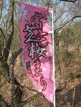 富士芝桜のぼり